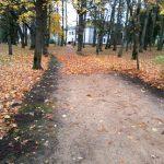 Atjaunojam hostu stādījumus gar parka takas malām