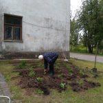 Papildinām no Pilkalnes muižas mantoto un saglabāto augu stādījumus